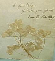 klöver plockade på glorup av H.C Andersen 1839